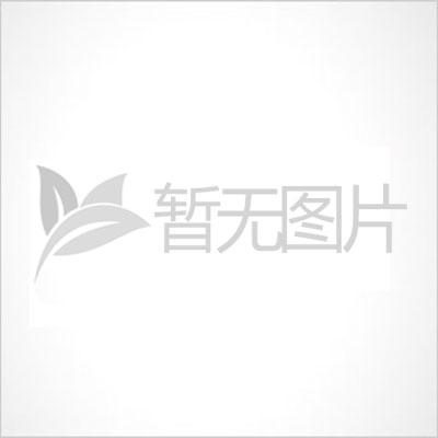 【长沙】1万红花继木苗,5500杜鹃苗起挖