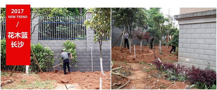 长沙别墅庭院绿化