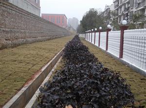 长沙道路绿化/小区绿化