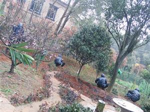 宁乡别墅庭院绿化